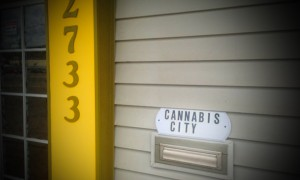 cannabis city countdown