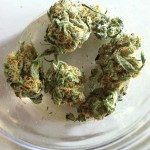 Blue-Dream-Marijuana-Strain-Liberty-Reach-Herbal-Nation