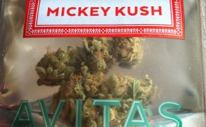 Marijuana Review: Mickey Kush Cannabis Strain By Avitas Agriculture & Sold At Herbal Nation