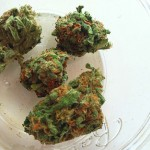 marijuana review: Durbin Poison by CannaSol Farms at Herbal Nation