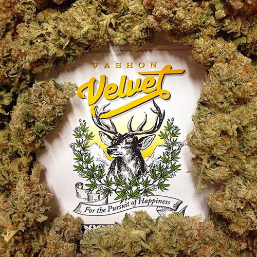 Vashon Velvet marijuana farm Seattle Washington State