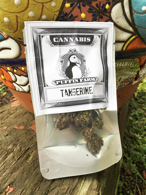 Tangerine marijuana review Puffin Farm